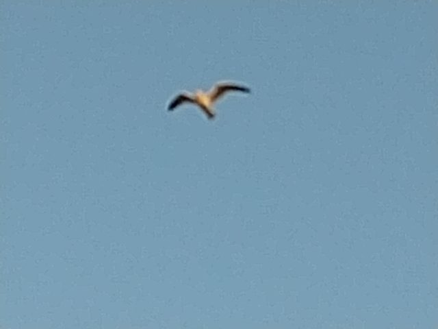 飛躍するカモメ2021