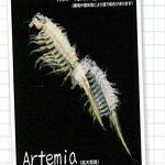 アルテミアをガチャって育て始めたけど全滅…改めて飼育方法を調べます