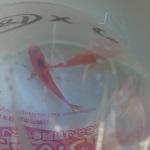 金魚すくいの金魚を7年、水替えなしで飼育した時のことをまとめてみた