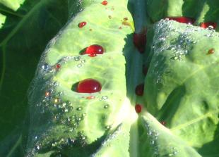 Creative Cabbage