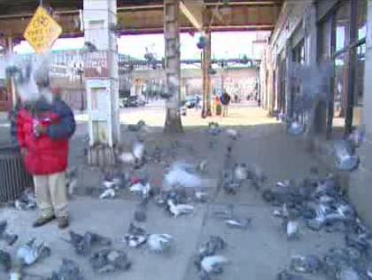 Birds being fed outside a train station