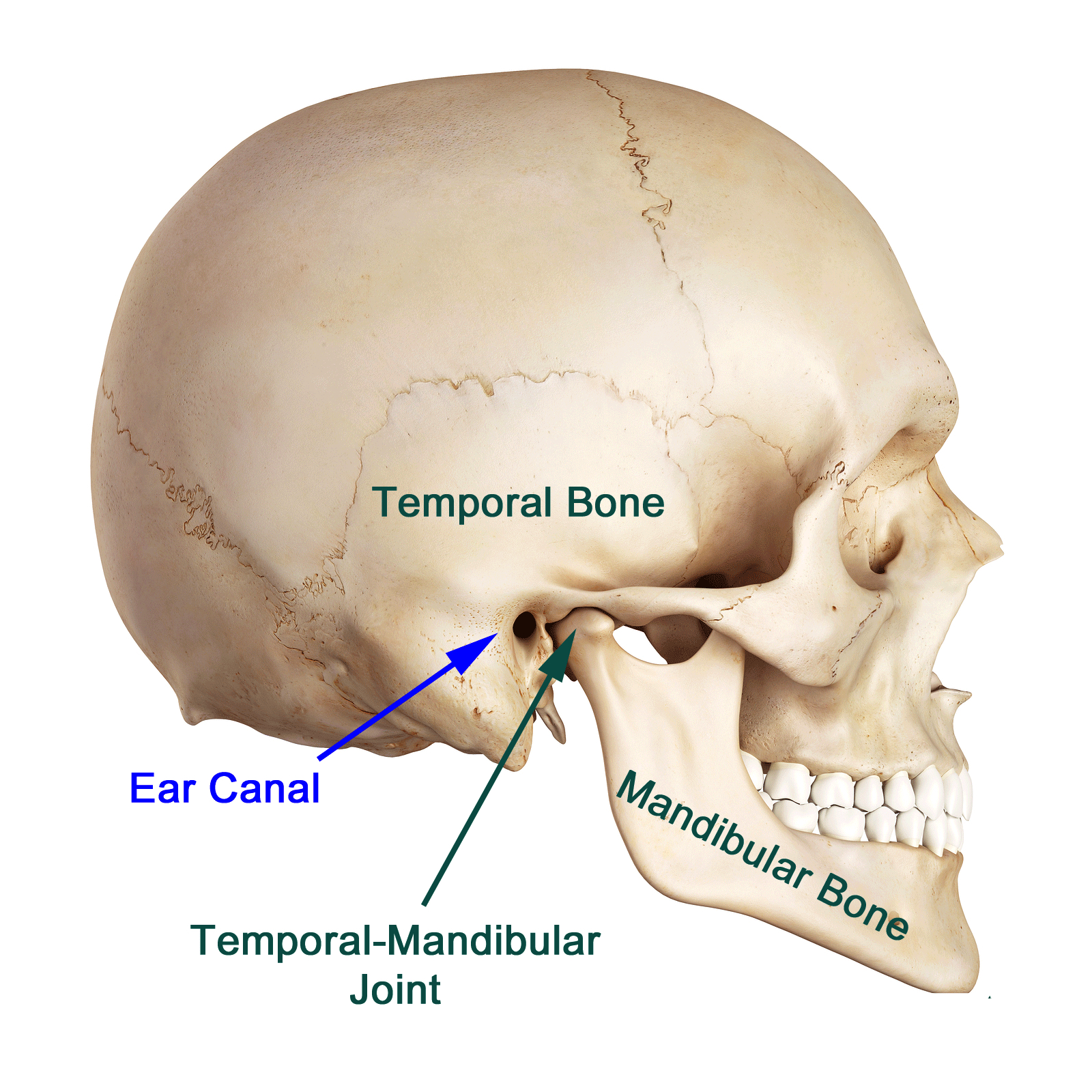 hight resolution of even with the advancement in research it is still difficult to pinpoint the exact cause of tmj most of the problems arise from problems with the muscles