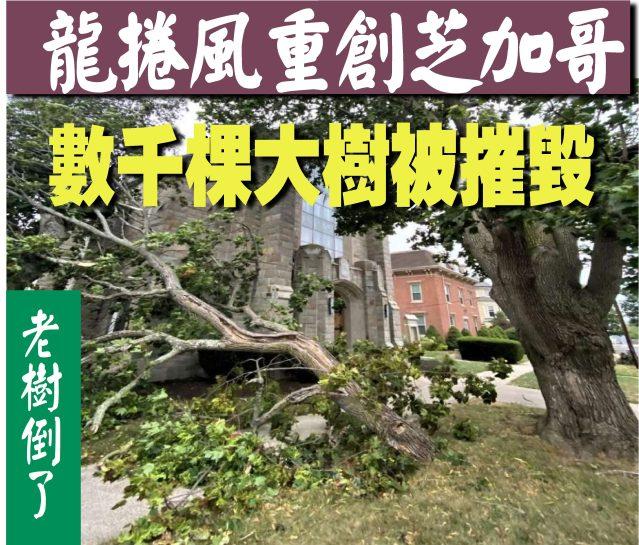 081620-07----龍捲風重創芝加哥, 數千棵大樹被摧毀-1