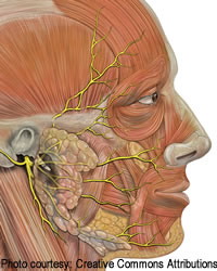 Facial Paralysis | Ear Institute of Chicago
