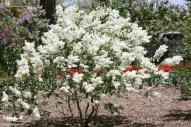 Lilacia Park 8 - http://chicagolandgarden.com/