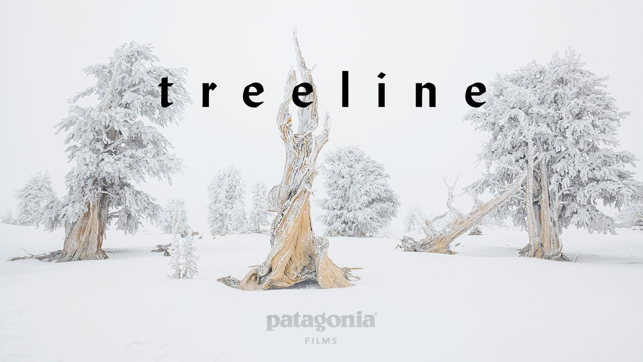 "Movie Night: ""Treeline: A Story Written in Rings"""