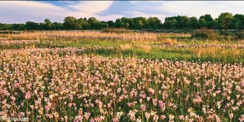 Chiwaukee PrairieState Natural AreaPleasant Prairie, Wisconsin