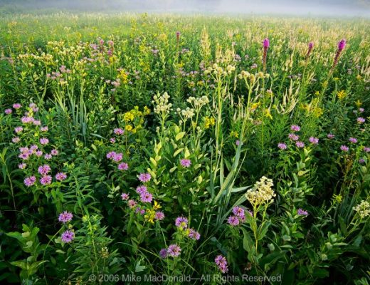 In July, the prairie explodes with diversity at Wolf Road Prairie.
