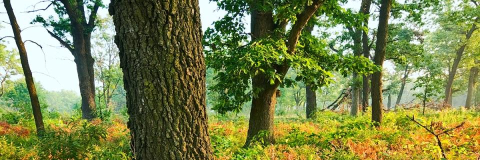 Hoosier PrairieState Nature PreserveSchererville, Indiana