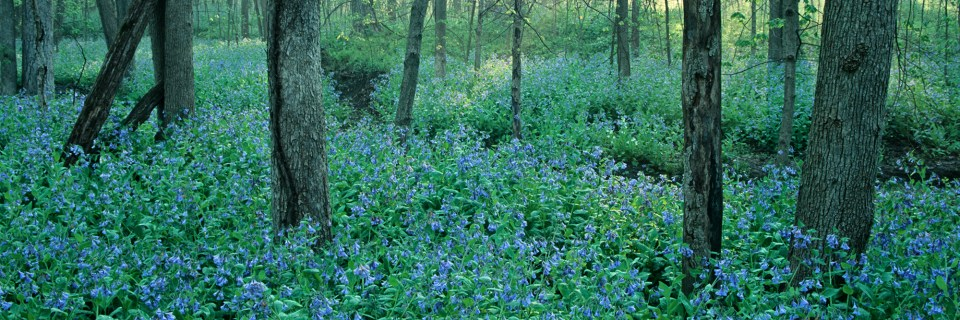 Messenger WoodsNature PreserveHomer Glen, Illinois