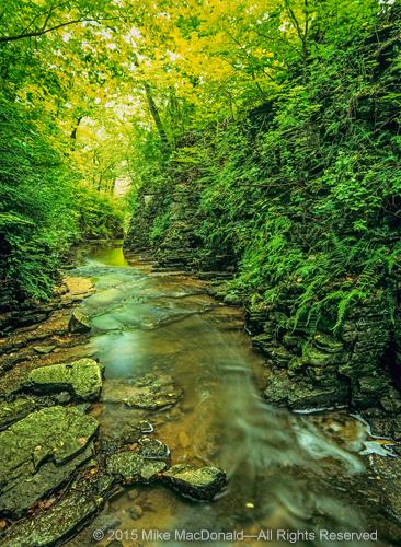 Lush ferns line the walls of Sagawau Canyon in Lemont, Illinois.