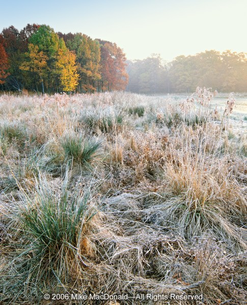 At Spears Woods, along the shore of Hogwash Slough, the first light to fall upon this autumn wetland reveals an intricate patina of frost formed by the foggy night air.*