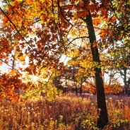 Best Chicago Fall Color Report, Nature News & Info – 09/26/2018