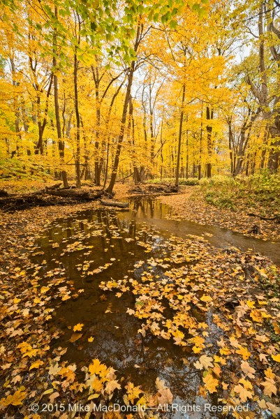 Visit Raccoon Grove in the fall for its golden maples and picturesque stream.*