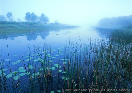 Chicago Nature Information By Mike Macdonald Plan Your Weekend Trip
