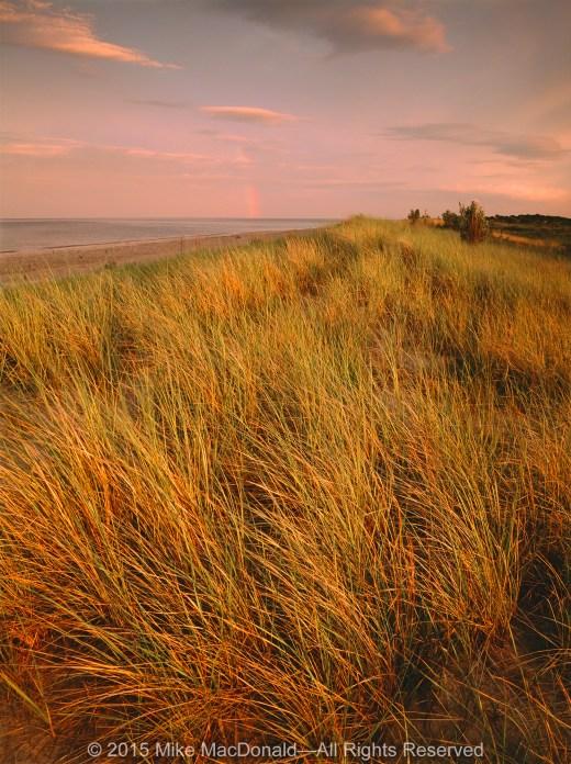 Rare marram grass dominates the foredune along the shore of Lake Michigan at Illinois Beach State Park in Zion, Illinois.*