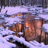 Finding Winter's Wonder and Whimsy in Chicago Nature