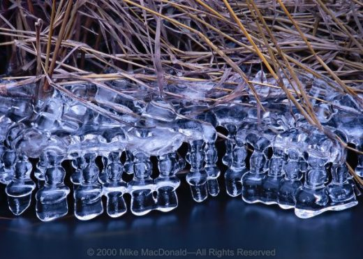 Reminiscent of champagne glasses suspended topsy-turvy above a bar, this January ice sculpture, softly curving and all in a row, hangs its existence on a chaotic latticework of streamside grasses. Sawmill Creek at Waterfall Glen Darien, Illinois*