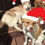 Pet Night with Santa at Water Tower Place