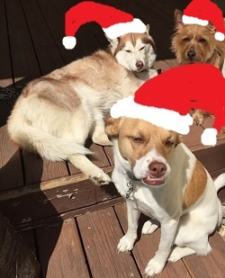 holiday-dogs