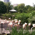 Free Family Festival Lincoln Park Zoo