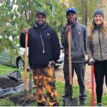 Free Neighborhood Improvement Tree Grant
