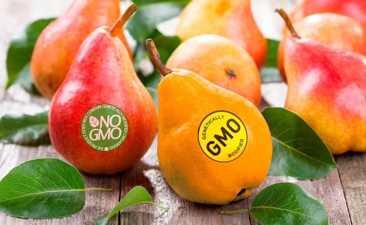 mixed messages muddle student attitudes on genetic modification