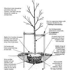 How To Construct A Tree Diagram 150cc Gy6 Scooter Wiring Chicago 39s Rain Harvesting Blog In The