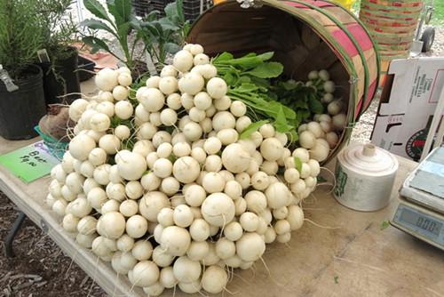 Turnips at the Green City Market