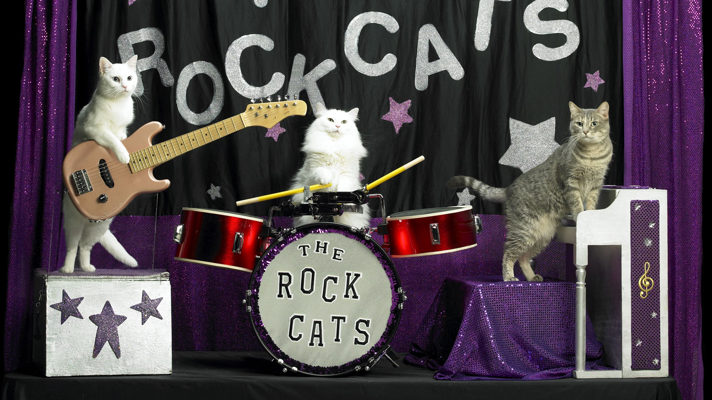 Tuna and the Rock Cats! make a rare, Instagram-worthy appearance with the Amazing Acro-Cats Thursday 10/19.