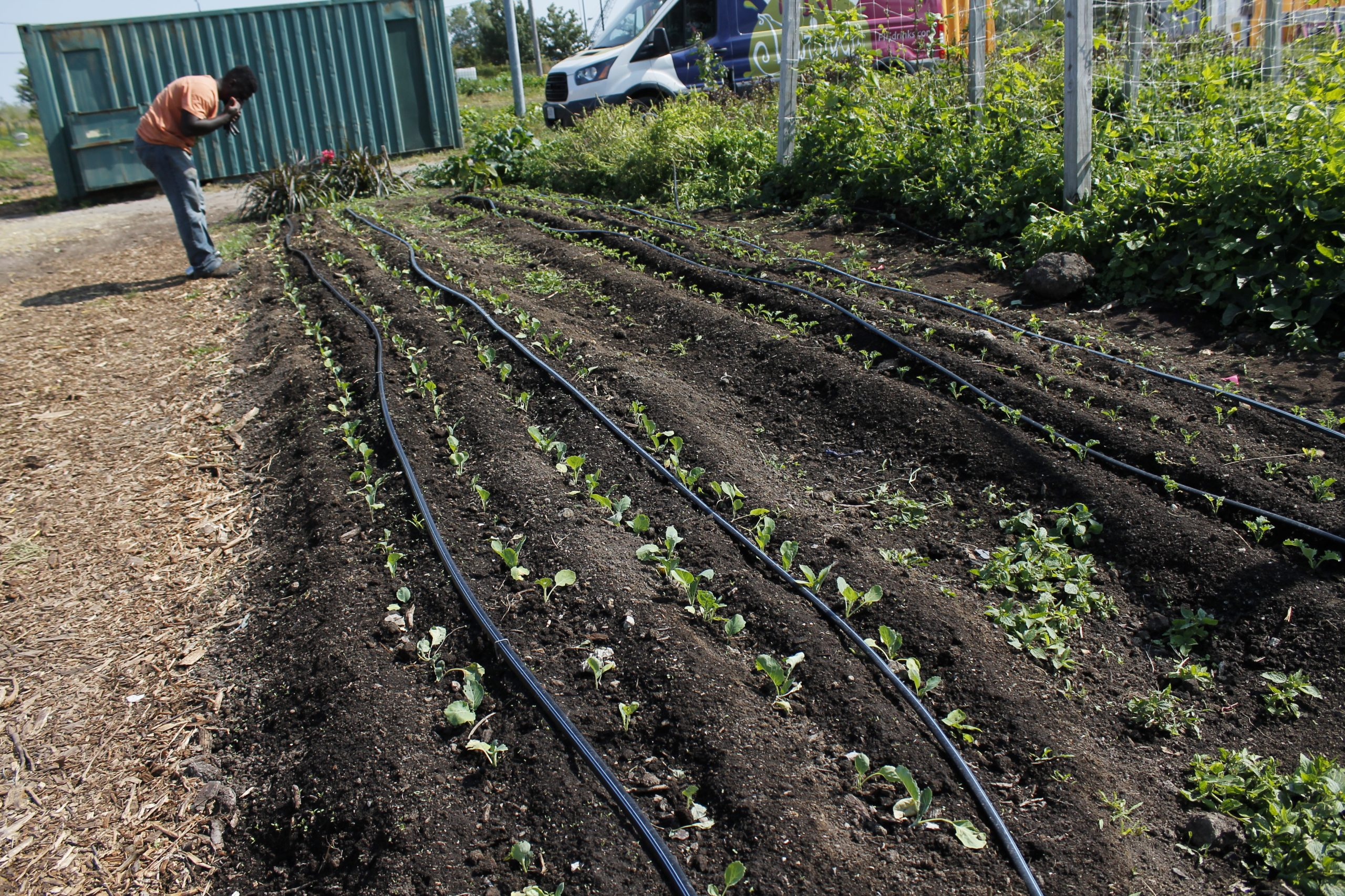 A committed crew helps keep UGC's eight urban farms producing organic produce year-round.