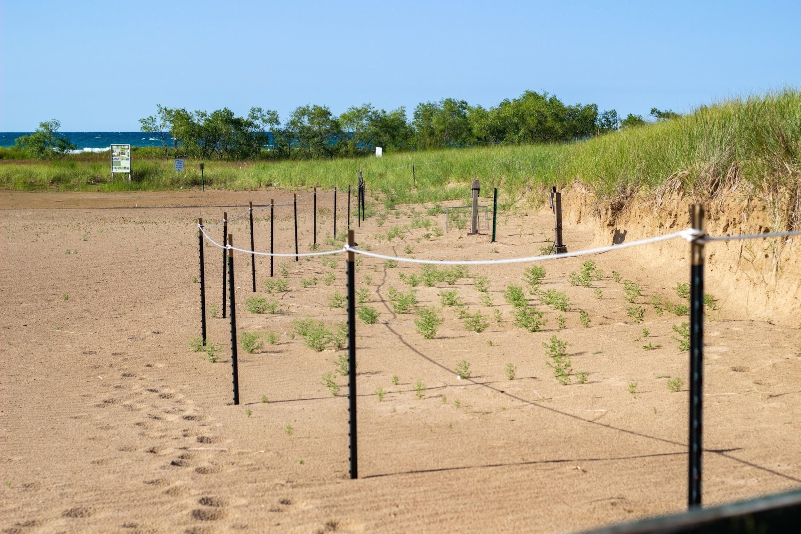 Temporary fencing was placed around the dunes to protect the nesting piping plovers.