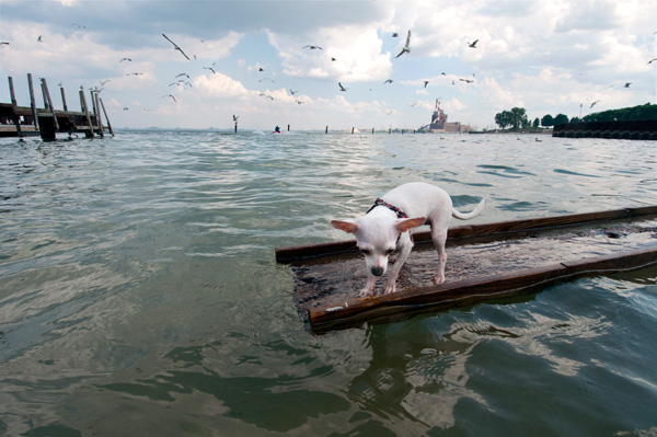 Chihuahua on a raft at the 95th Street Beach in Chicago