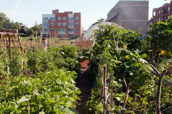 The Global Gardens Refugee Training Farm sits on a city-owned lot just to the west of the river and Ronan Park.