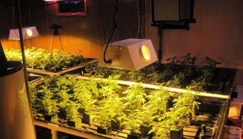 In the basement of a house on South Exchange, investigators found lights hung from motorized tracks, a timer-based watering system, and nearly 200 pot plants.