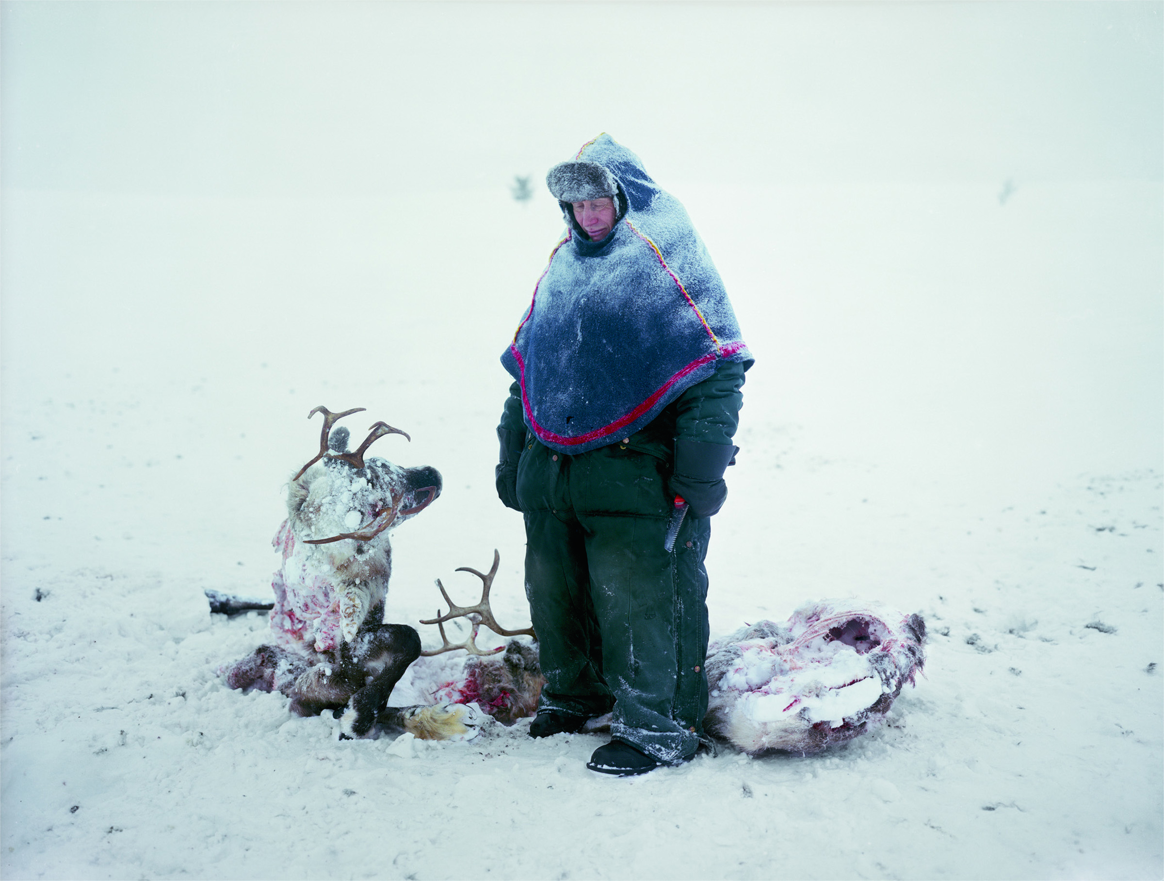 A Sami man in Sweden mourns the loss of two reindeer that starved after locking horns in a fight for dominance. Larsen lived with the man and his family for two years, working as their housekeeper.