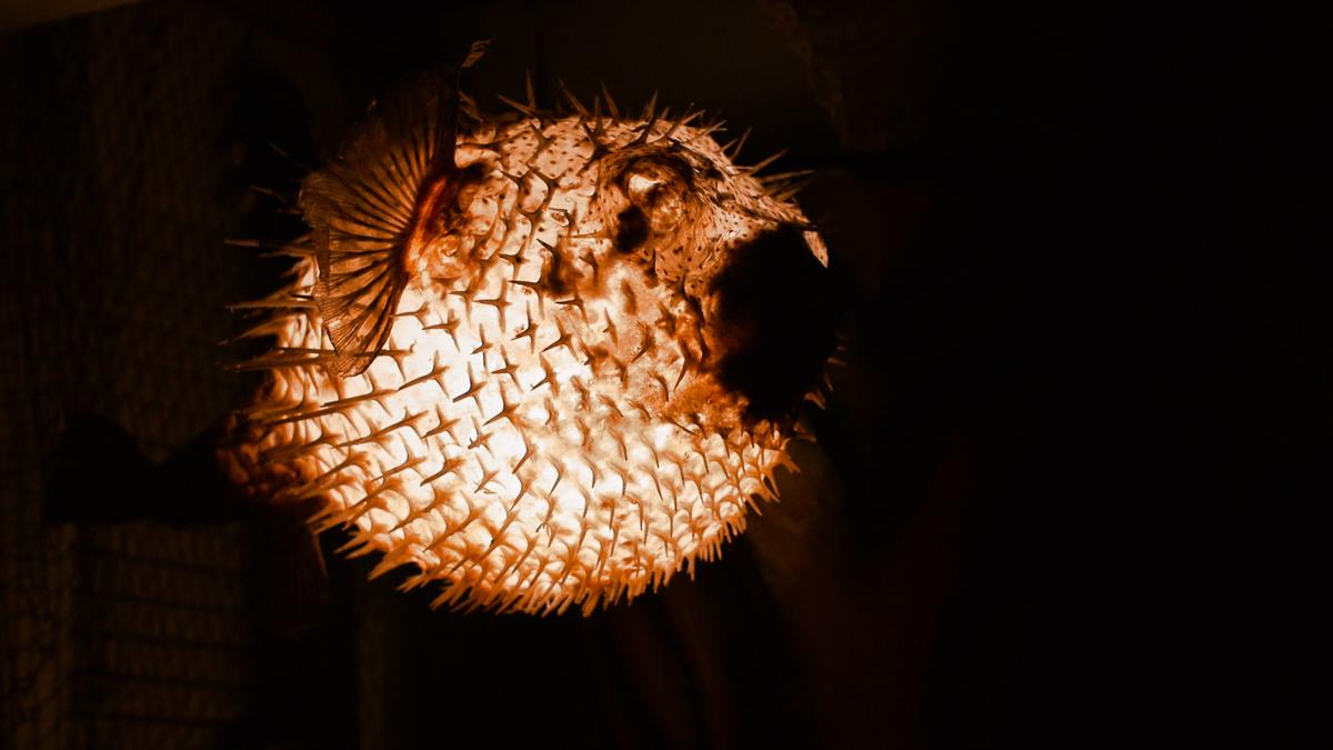 A pufferfish lamp lights the way.
