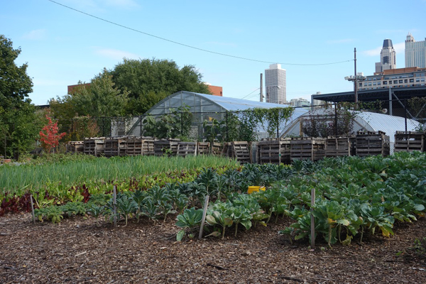 The greenhouse aided in the transition to an urban farm.