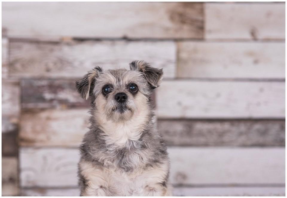 Pet Photo session in Red Deer Studio
