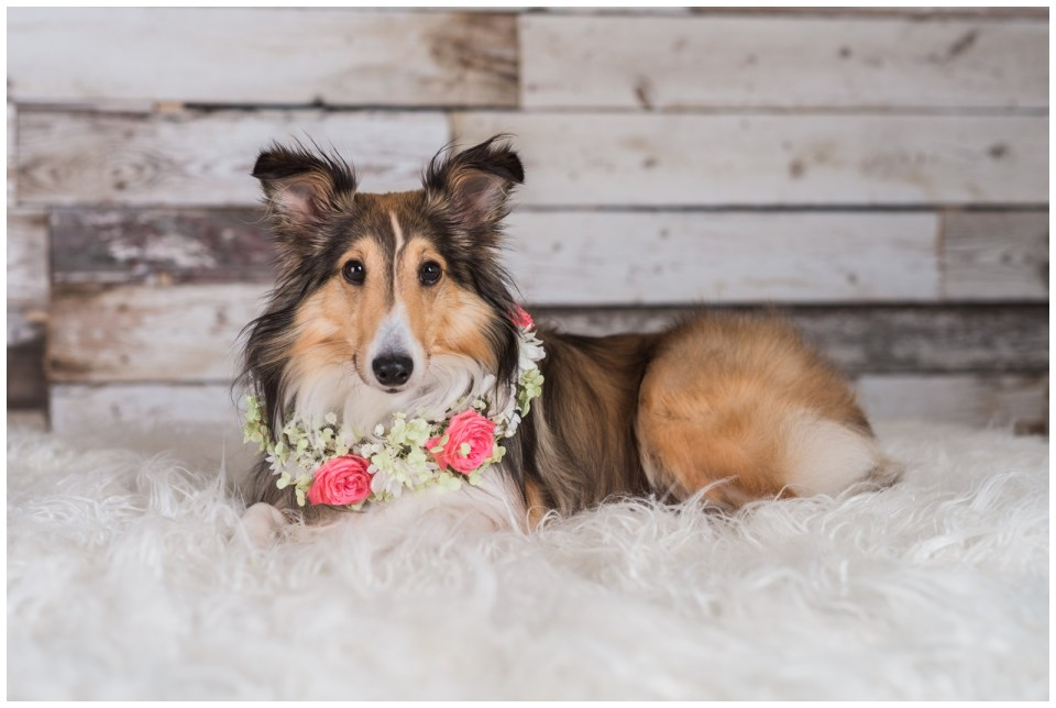 CAHS Pet Calendar Photo Contest