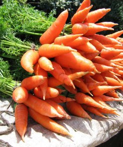 carrot-chantenay