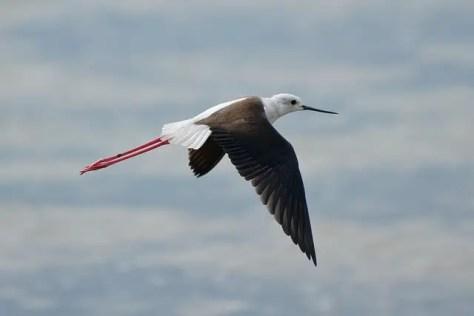 Bird at Speke Bay Lodge, Tanzania