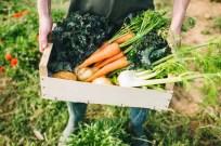 Farm to Table Produce