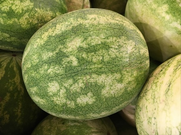 watermelon on what I can feed my chickens to keep them healthy