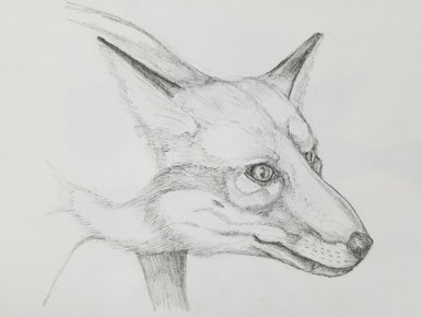 Sketch of Fox Courtesy of Paul Smith