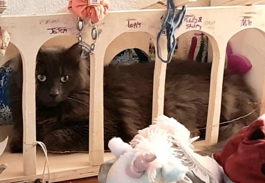 cutest picture of gray cat in toy stable