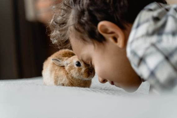 child being gentle with pet bunny