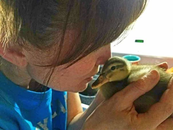 very cute picture of duckling