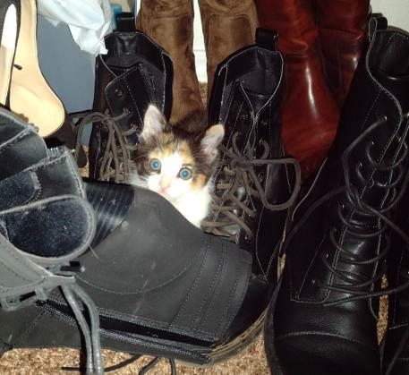 Calico kitten hiding in a closet of shoes