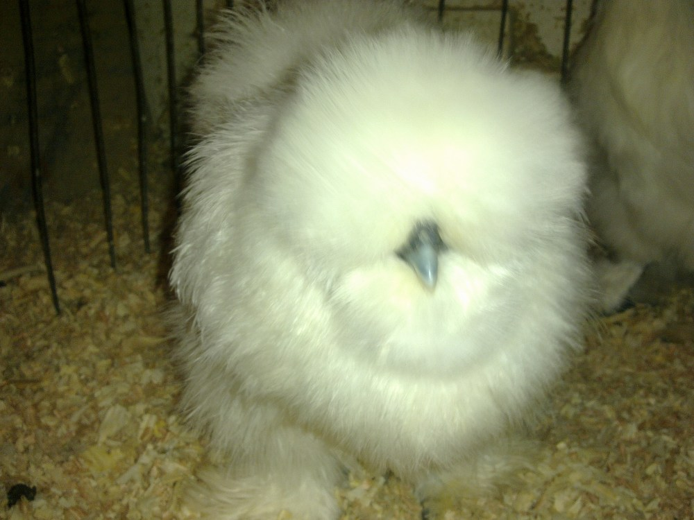 SILKIES THE UPS AND THE DOWNS (5/6)